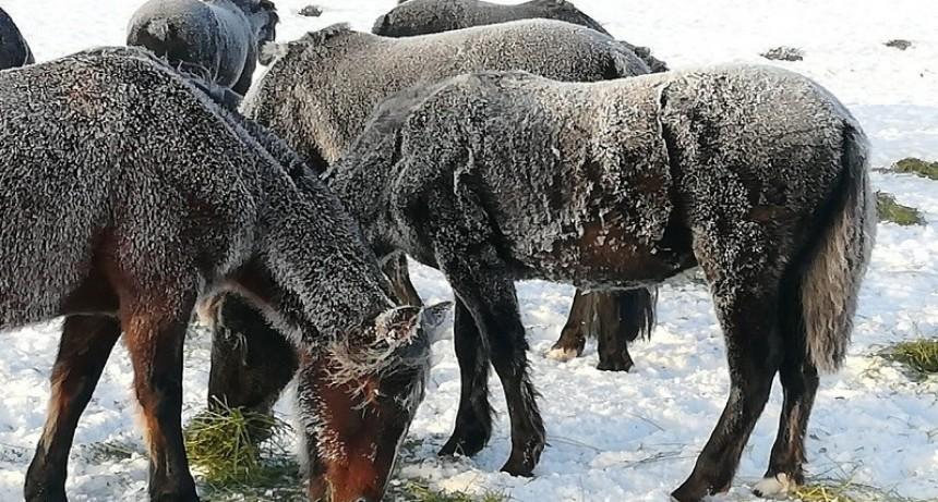 Enfrentar nevadas extremas y evitar pérdidas ganaderas, el desafío