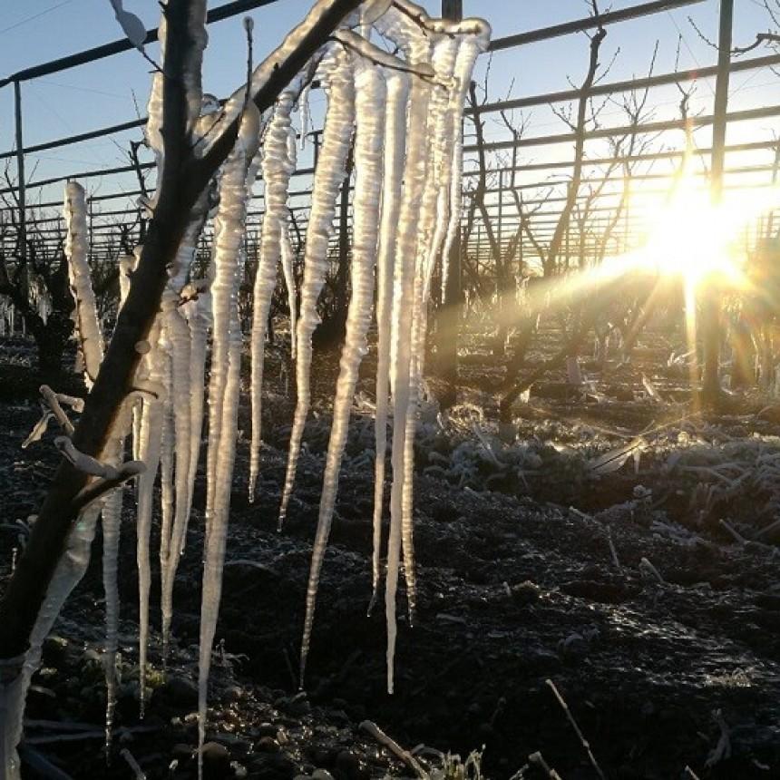 En algunas zonas del país, las heladas superaron el récord histórico