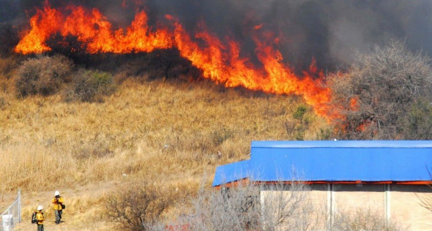 Se queman más de 200 mil hectáreas en la Argentina y el fuego amenaza a varias especies