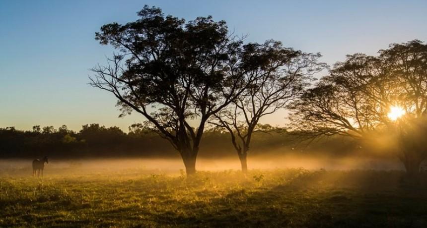 Frenar la deforestación y producir más, una misión posible