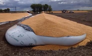 Destruyen ocho bolsas repletas con granos: dicen que fue un