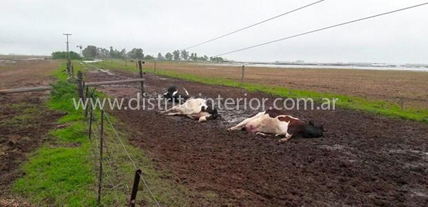 Rayo mata tres vacas en General Villegas durante una feroz tormenta