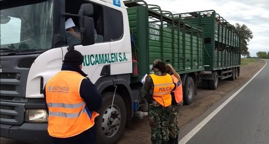 Continúan los controles sorpresivos a transportes de carga en rutas del norte bonaerense