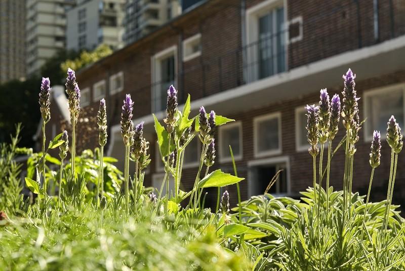 Integrar la naturaleza en entornos urbanos mejora la calidad de vida