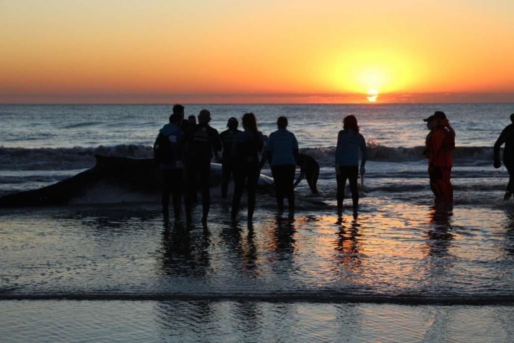 El conmovedor rescate de dos ballenas que quedaron varadas en la Costa bonaerense