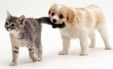 """""""Castración de felinos y caninos"""""""