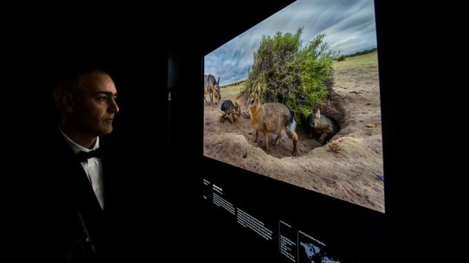 Un fotógrafo del Conicet, seleccionado entre los mejores reporteros gráficos de vida silvestre del mundo