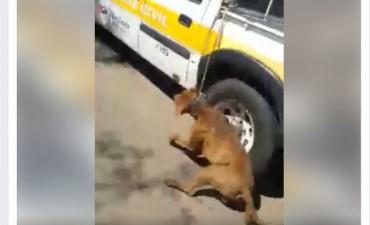 Impotencia: Un hombre en un vehículo de Defensa Civil Chacabuco arrastraba un perro