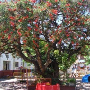Se realizó la feria nacional de innovacion educativa  y el Jardin 901 de Los Toldos obtuvo una distinción