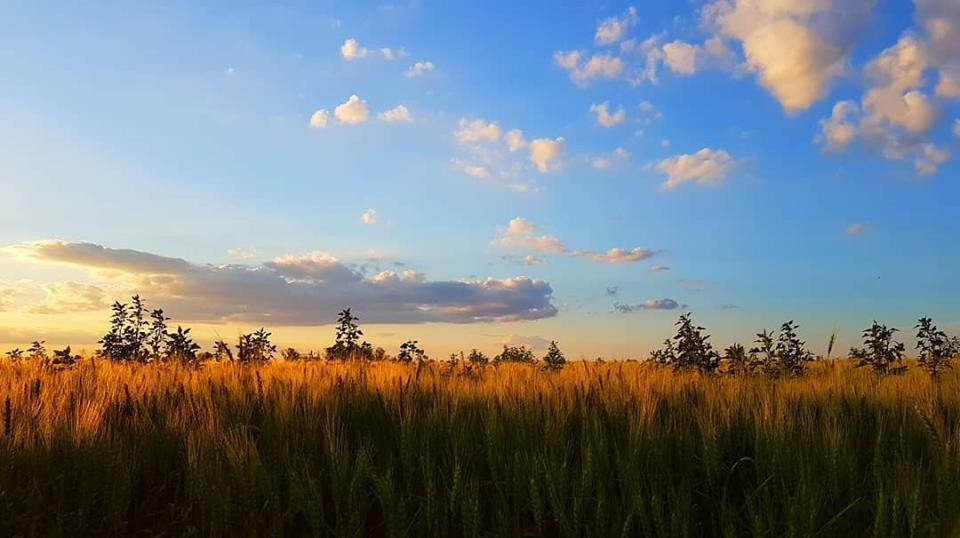 Info para el hombre de campo:  Presentada por la Asociación rural de Gral Viamonte