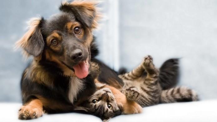 Hasta el viernes 15  se estará castrando a perros y gatos en forma gratuita