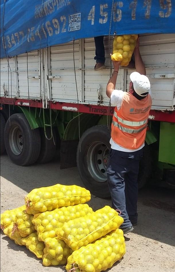 El Senasa evitó que limones sin documentación ingresen al circuito de consumo