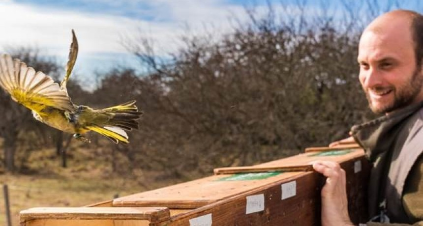 Revirtiendo el tráfico ilegal: 19 aves en peligro de extinción fueron reinsertadas en su ambiente natural