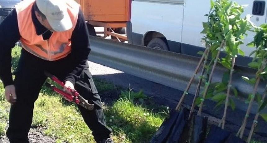 En San Pedro, el Senasa destruyó plantas cítricas de origen desconocido para prevenir la difusión de plagas