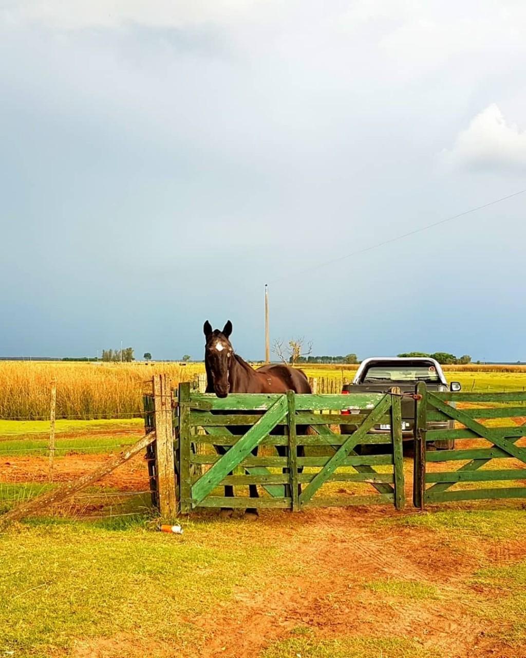 MERCADOS | Para el hombre de campo. Presenta Asociación rural de Gral Viamonte