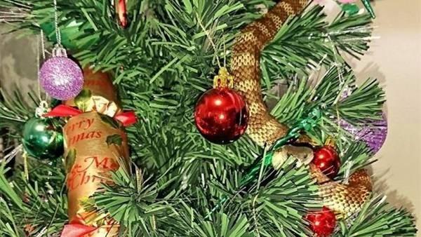 Encontró una serpiente entre las guirnaldas de su árbol de Navidad