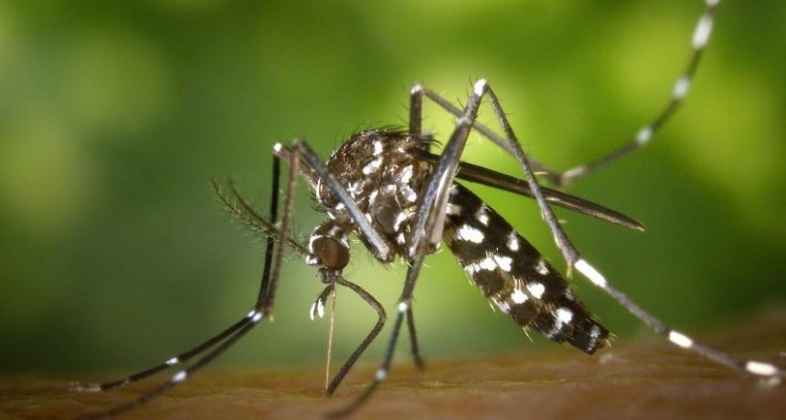 Dengue, zika y chikungunya: métodos de prevención