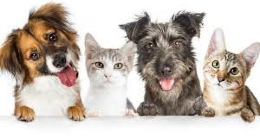 El móvil veterinario llega cerca de tu casa