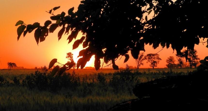 MERCADOS. Para el hombre de campo. Presenta Asociación rural de Gral Viamonte