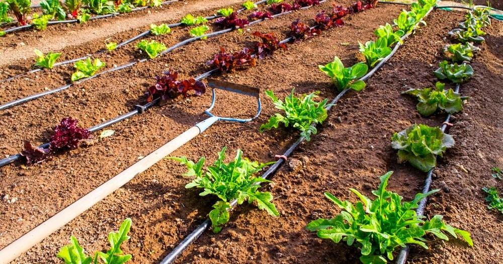 CECILIA SARCO: Es posible hacer horticultura en nuestra zona