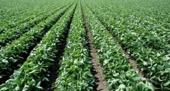 Informe para el sector agropecuario