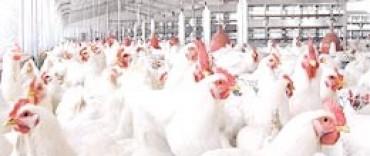 El precio del pollo, por las nubes