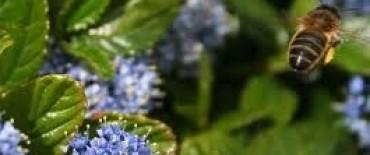 Pesticidas ponen en peligro a las abejas