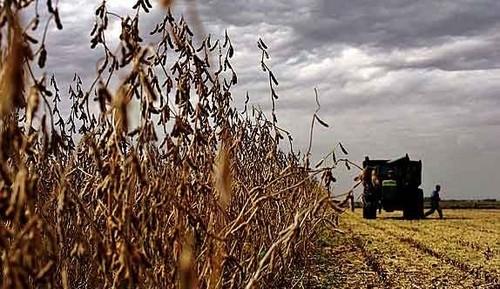 """Dólar: el campo dice que """"no hay soja para liquidar"""""""