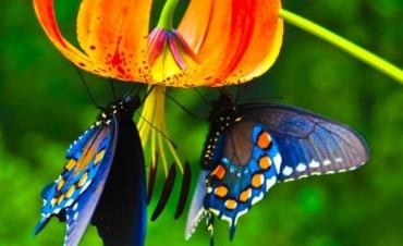 Crearon en Miami un jardín para mariposas, único en el mundo