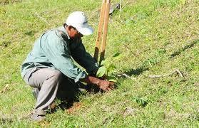 Todas las escuelas bonaerenses contarán con su propio arboreto de especies nativas