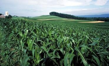 Asuntos Agrarios apuesta al uso responsable de plaguicidas